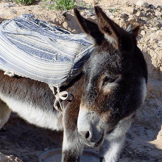 Donkey in Matmata, Tunisia, Africa